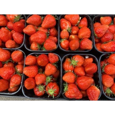 Aardbeien 1 bakje