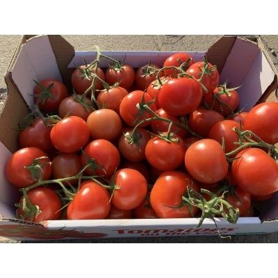 Tomaten 1KG